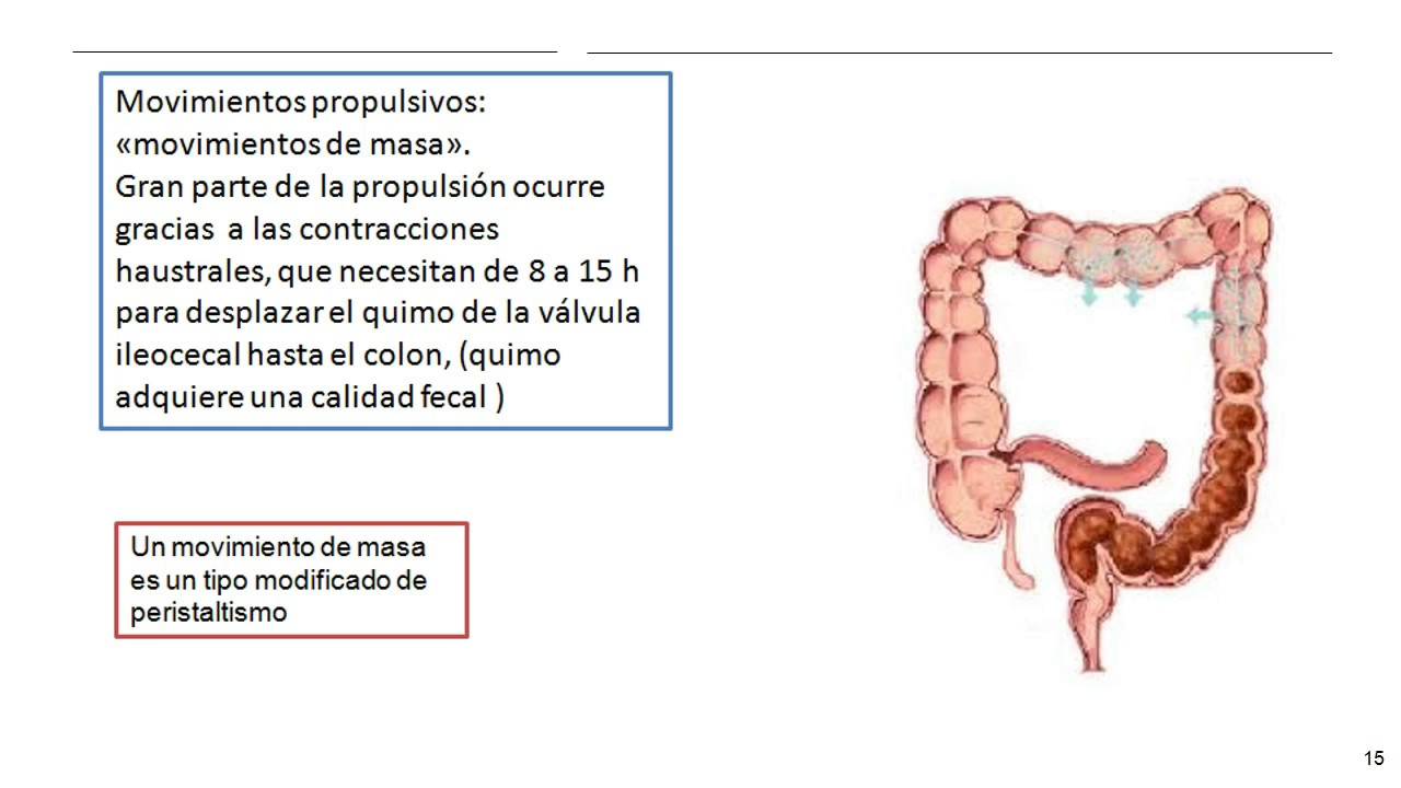 FISIOLOGÍA-INTESTINO GRUESO - YouTube
