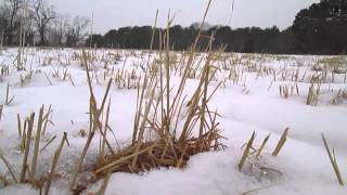 Winter at Fuller Farm, February 2014 Thumbnail