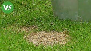 Rasen ausbessern - Tipps zur Rasennachsaat