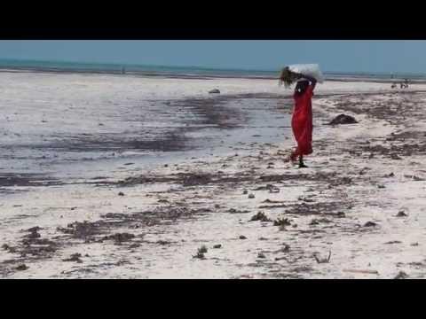E2 - Paje, Zanzibar