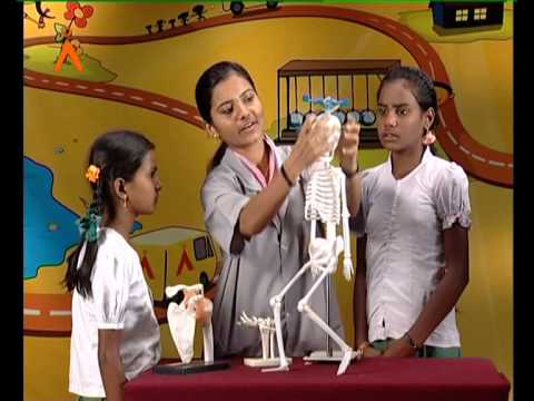 The Human Skeletal System (Kannada)