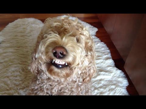 Cutest Dog Smile Ever!