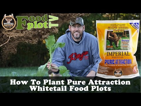 How To Plant Pure Attraction Whitetail Institute Food Plots