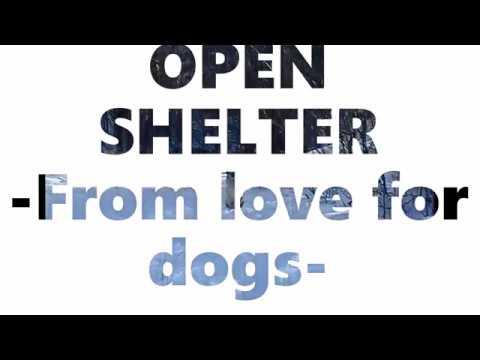 Open Shelter Targu Ocna