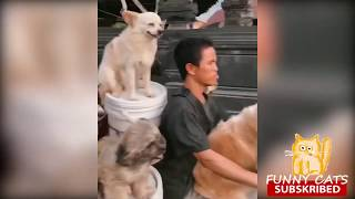 😁 Funny Cats 😻 and 🐶 Dogs - Funniest Animals Life 2019