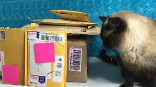 cinco de mailo fan mail time may 2015 opening