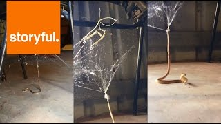 Snake Gets Trapped in Redback Spider's Web (Storyful, Crazy)