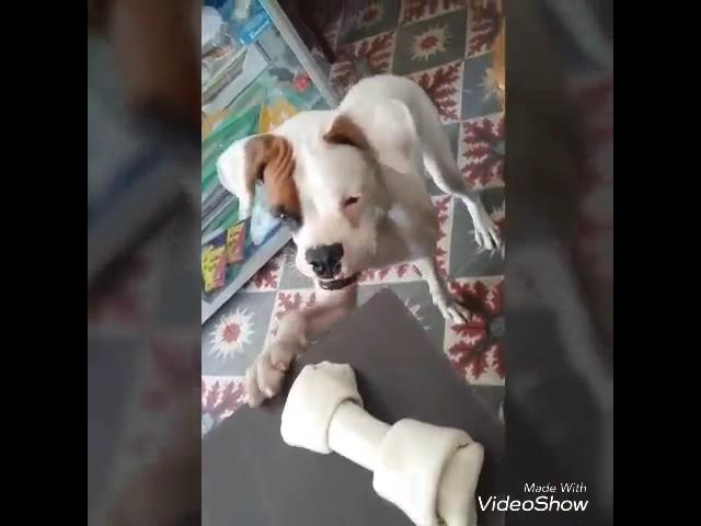 Quiero mi hueso?