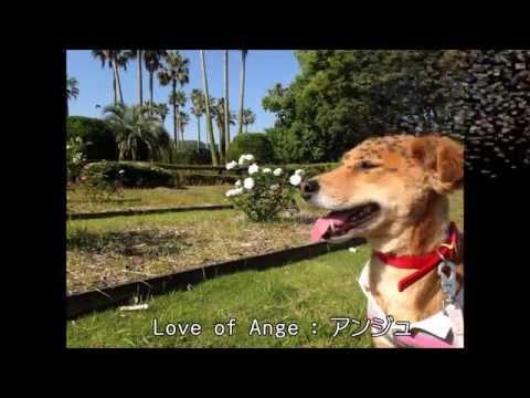 わんにゃん通販応援隊!犬猫、ペット用品!可愛い服や小物、便利グッズを全て手作りのチャリティ通販!Love of Ange