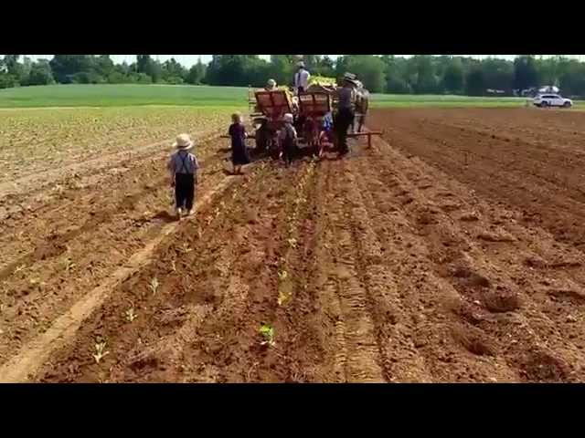 UNITRIUM TRANSPLANTER PULLED BY HORSES PENNSYLVANIA USA
