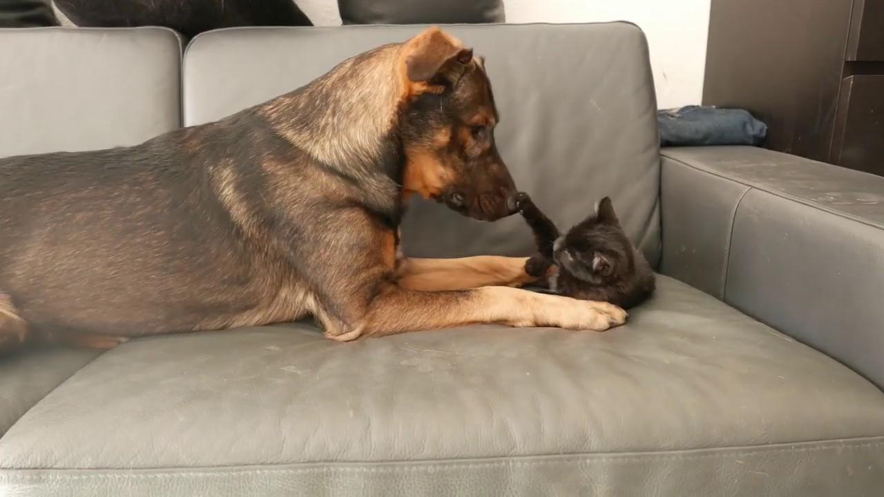 1ere rencontre chien et chat site de rencontre yonne