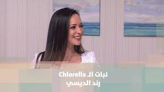 نبات الـ Chlorella - رند الديسي