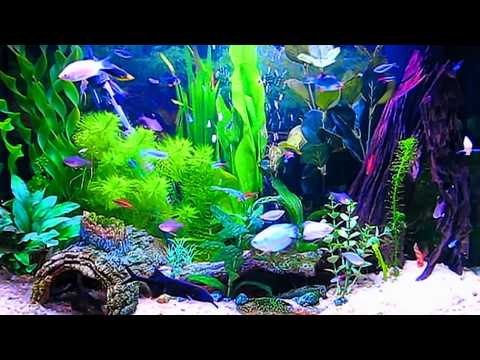Amazing HD Aquarium ScreenSaver Free Windows And Android Full HD