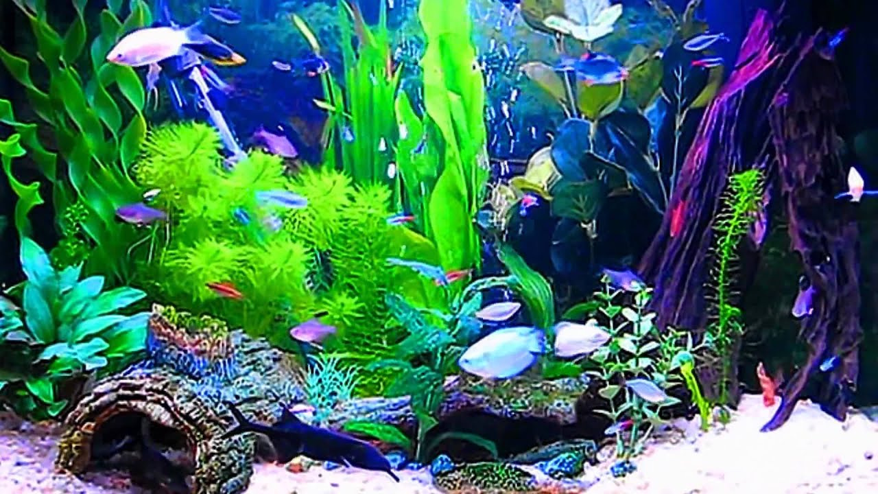 Amazing HD Aquarium ScreenSaver Free Windows and Android Full HD - YouTube