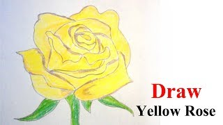 yellow rose drawing draw step easy drawings very paintingvalley