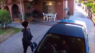 Little Dog Barks Bravely at Car Thief