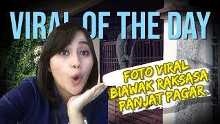 VIRAL OF THE DAY - Foto Viral Biawak Raksasa Panjat Pagar Rumah