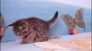 Продается плюшевый котик