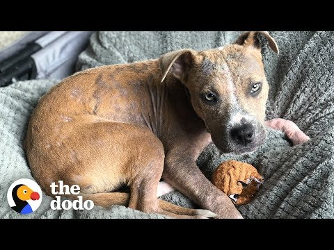 Heather Burnside - Paw Purr Azzi: Puppy Found Covered In Ticks Makes Complete Transformation