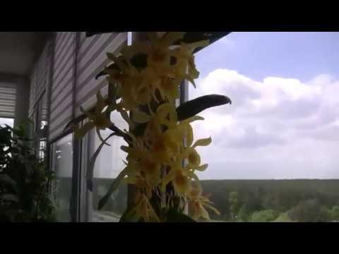 Виды комнатных растений и цветов Названия Фото