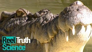 Animals Did It First - How Do Animals Use Weaponry? | Science Documentary | Reel Truth Science