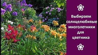 ❀ Выбираем солнцелюбивые многолетние цветы для дачи
