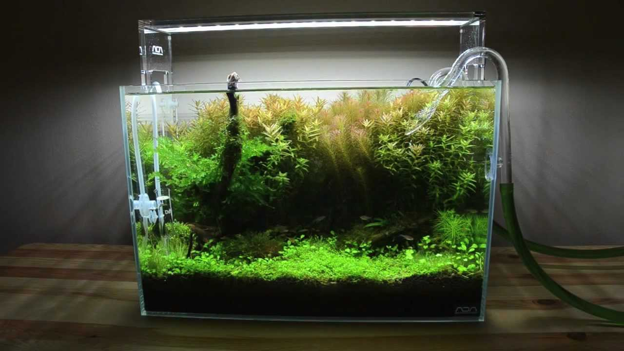 Planted tank mini nature aquarium ada aquasky update for Ada fish tank