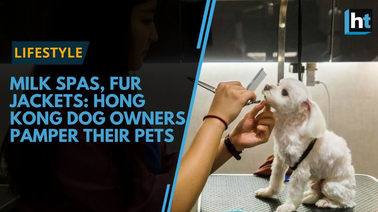 Milk spas, fur jackets: Hong Kong dog owners pamper their pets