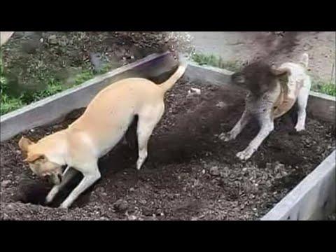 Хулиганы проказники смешные животные