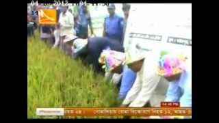 HELVETAS Swiss Intercooperation-Bangladesh promoting early varieties rice in haor areas