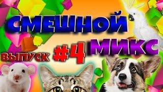 СУПЕР ЛУЧШАЯ порция СМЕХА Смешное видео про животных Смешной микс 4 ПОДПИШИСЬ на канал