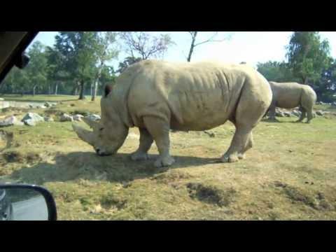 Zoo Safari di Pombia (Novara)