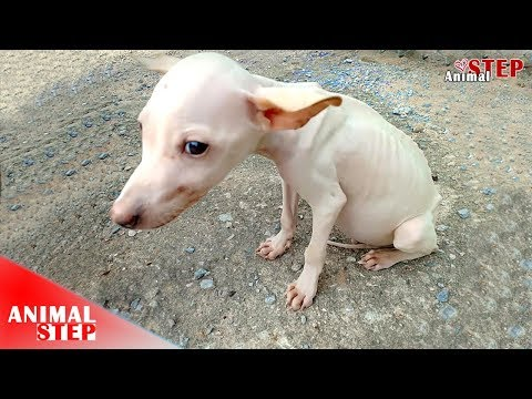 Pitiful Sick Dog Keeps Strong in Treatment with Hope for Recovery