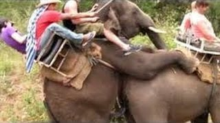 Best Epic Animal compilation 2016 - Faze comice animale pufosenii - Epic Fails 2016 |