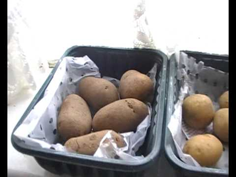 growing potatoes in containers pt 1