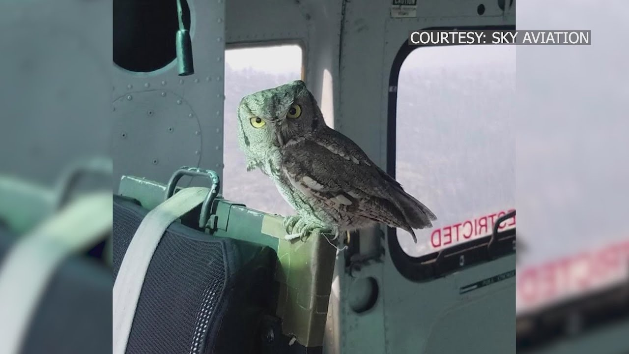Eyewitness News 'One in a million shot:' Owl lands inside helicopter battling Creek Fire