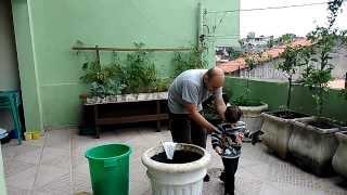 Plantando o Felipe no vaso