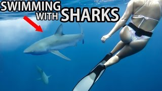 SWIMMING IN SHARK INFESTED WATERS | 4K