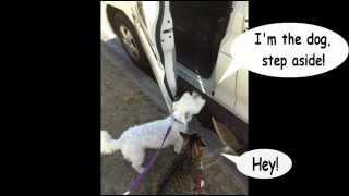 A Cat Outsmarts A Dog In 'shotgun'
