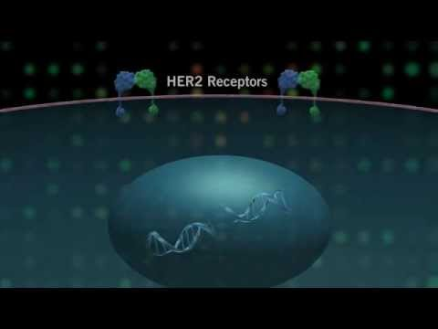 The HER Pathway and Cancer