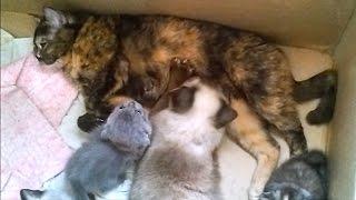 Adult cat imagined herself like a kitten