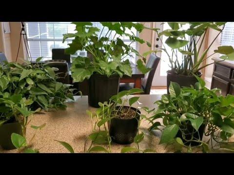 TOP 5 INDOOR PLANTS   DONNA JOSHI