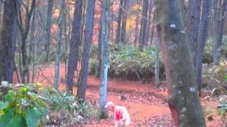 せら(サルーキ)と里山を歩くと・・・こんな感じで、私は置いてけぼり...