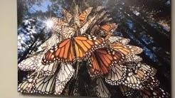 Angels Among Us - Hospice in San Antonio, Texas