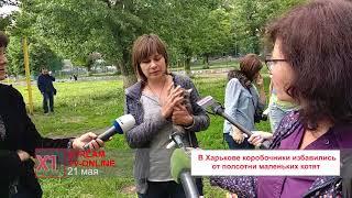 В Харькове коробочники избавились от полсотни маленьких котят