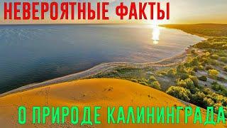 Невероятные факты о природе  Калининграда