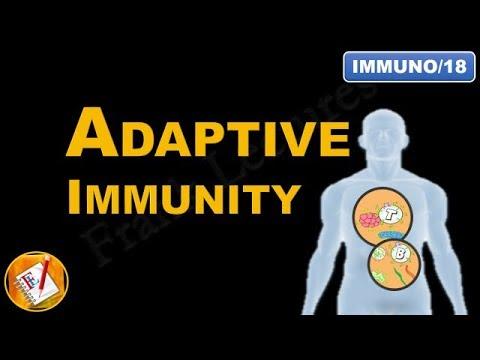 Adaptive Immunity - An Introduction (FL-Immuno/18)