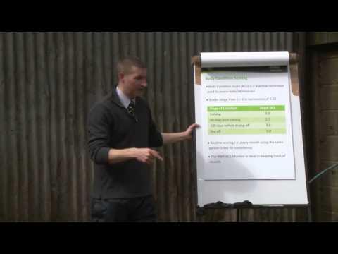 Cow Signals - Feeding Signals & Rumen Fill, Tom Hough
