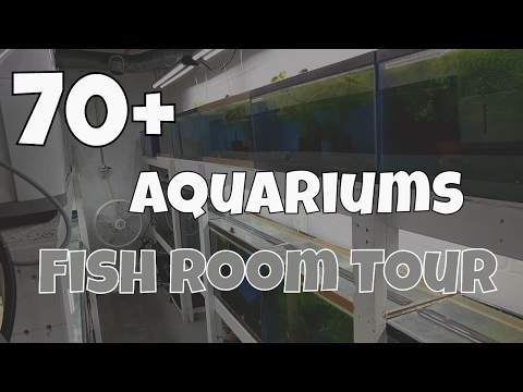 Fish Room Tour - Angelfish and Pleco Breeder
