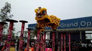 Gamuda Cove Grand opening Lion dance ~ 2